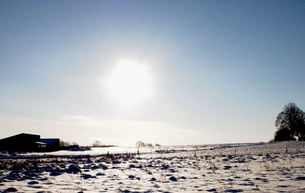 Harevænget en vinterdag